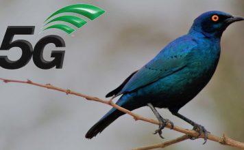 5G birds